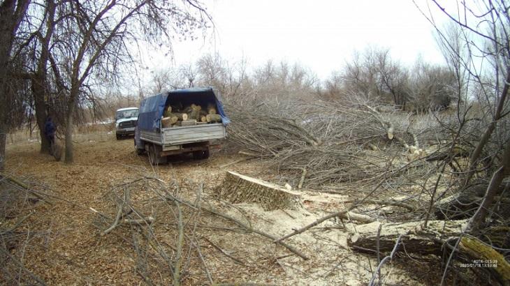 Астраханских «чёрных лесорубов» ждёт суд