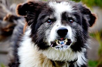 Эффективные средства борьбы с бродячими псами хотят запретить
