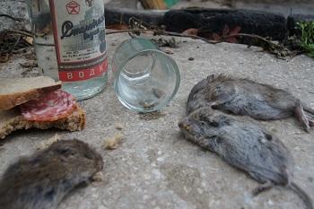 Астраханские алкоголики убили собутыльника за «крысятничество»