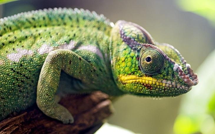 Обитатели астраханского зоопарка окажутся в библиотеке