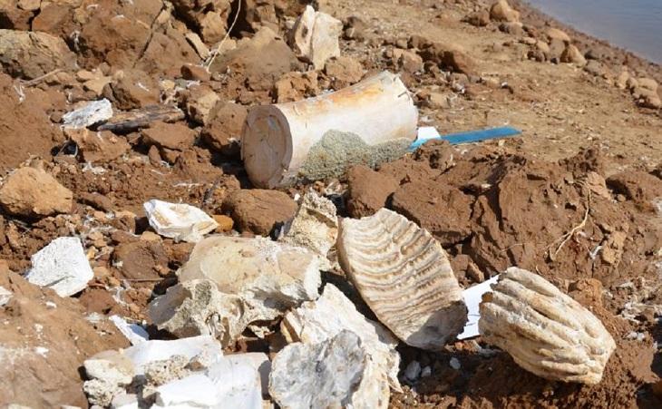 Под Астраханью найдена часть скелета мамонта