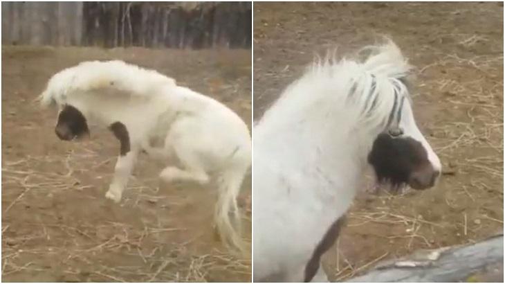 Под Астраханью завелась маленькая лошадка