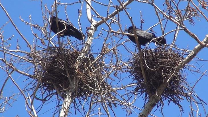 Астраханские птицы торопят весну