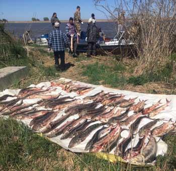 На астраханских раскатах задержаны дагестанцы-браконьеры с осетрами и сазанами