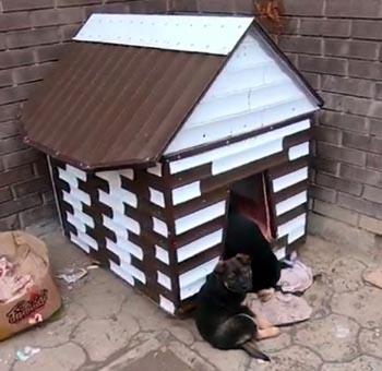 Сердобольные астраханцы построили домик бродячим собакам