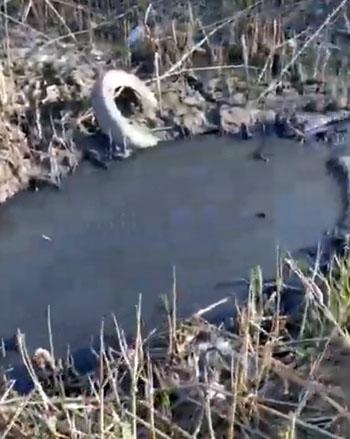 Чёрные ассенизаторы продолжают загрязнять Астрахань