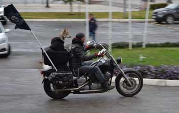 Астраханский байкер рассказал, зачем он возит собаку на мотоцикле