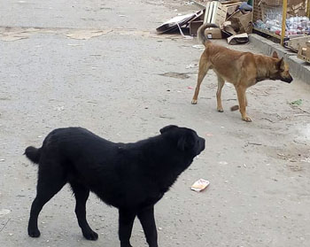 Астрахань захватили стаи бродячих собак