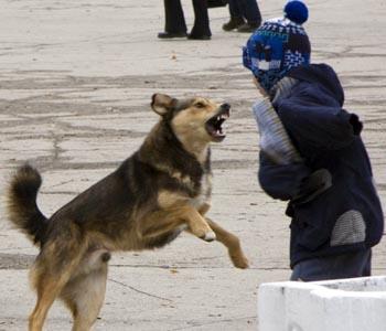 Астраханских детей продолжают атаковать бродячие псы