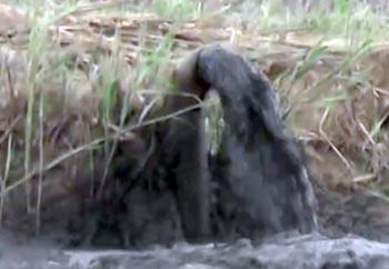 Астраханец зафиксировал на видео экологическую катастрофу в районе аэропорта