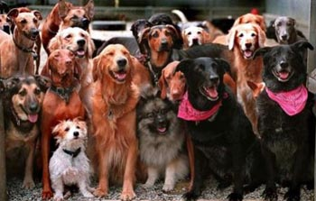 В Астрахани хотят открыть парк для собак
