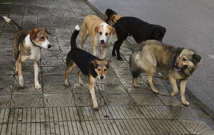 В Черноярском районе умертвят 870 бродячих собак