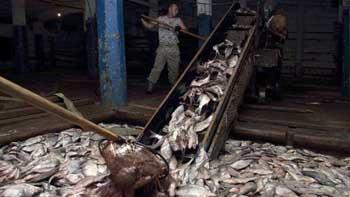 Рыбопромышленники выставили секрета раньше срока начала путины