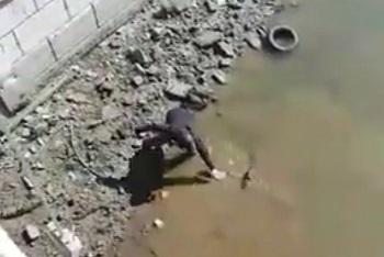В центре Астрахани ловят большую рыбу руками. Видео в доказательство