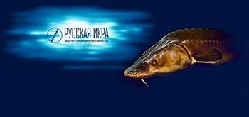 В ООО «Русская икра» прошли обыски
