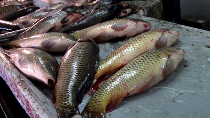 В Астрахани продолжается борьба с незаконным оборотом рыбной продукции