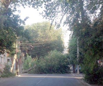 В центральном районе Астрахани одно за другим падают деревья