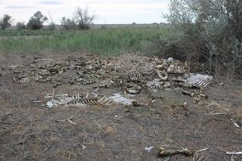 В Астрахани обнаружена свалка животных