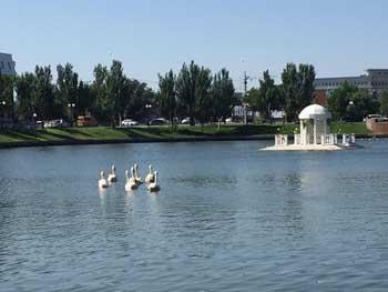 Неизвестный человек выпустил в Лебединое озеро лебедей