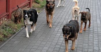 В Астрахани проверят отлов бродячих животных
