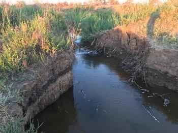 Из-за халатности чиновников в Астраханской области гибнет рыба