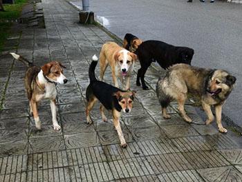 Астраханские власти вновь тратятся на стерилизацию и умерщвление собак