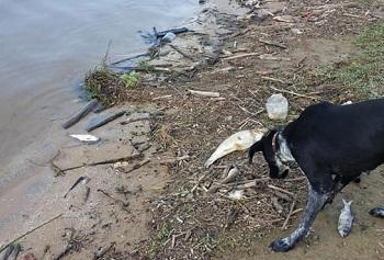 В Астраханской области по-прежнему фиксируют гибель рыбы