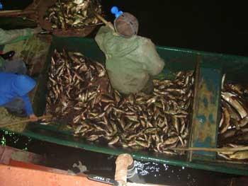 В Астраханской области задержаны рыбаки, пытавшиеся присвоить часть улова