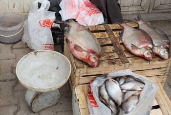 В  Астраханской области  продолжают торговать рыбой на несанкционированных рынках