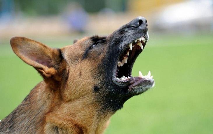 В Енотаевском районе возбуждено уголовное дело по нападению собаки на ребенка