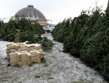 В Астрахани продавали новогодние ёлки вне закона