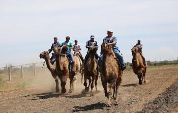 В Астраханской области состоялись уникальные верблюжьи бега. На призы компании «ЛУКОЙЛ»