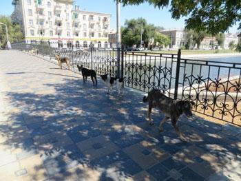 Клуб Политической Дискуссии в Астрахани обсудит проблему бродячих собак