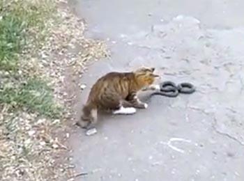 В Астрахани кот схватился со змеёй
