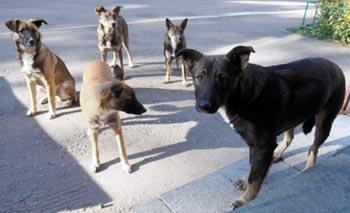 Стаи бродячих собак вновь напали на детей в Астрахани