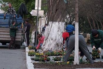 Мэрии Астрахани советуют не увлекаться цветочками