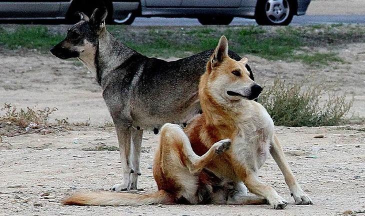 В районах Астраханской области активно борются с бездомными собаками