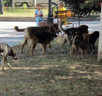 Власти Астрахани оплатят умерщвление 600 животных
