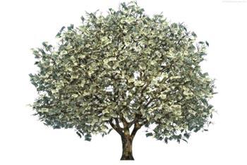 Фемида пожалела астраханского чиновника, требовавшего взятку за сруб дерева