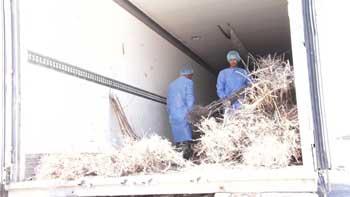 В Астраханской области сожгли пять тысяч саженцев персика
