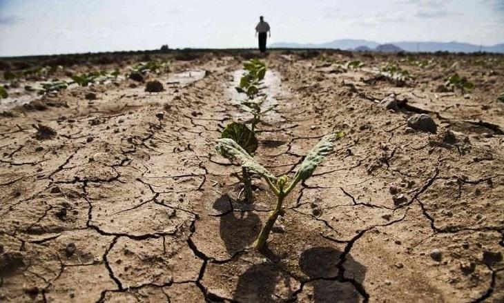 Четырём районам Астраханской области грозит засуха