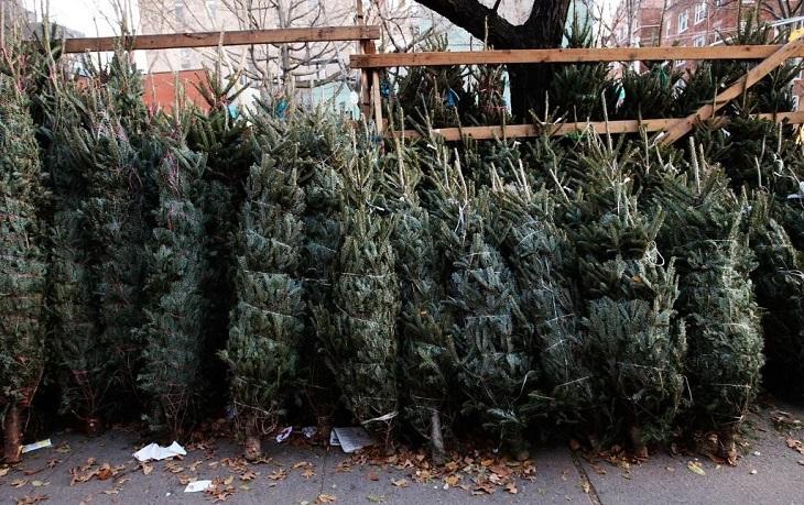 В Астрахани началась торговля новогодними деревьями
