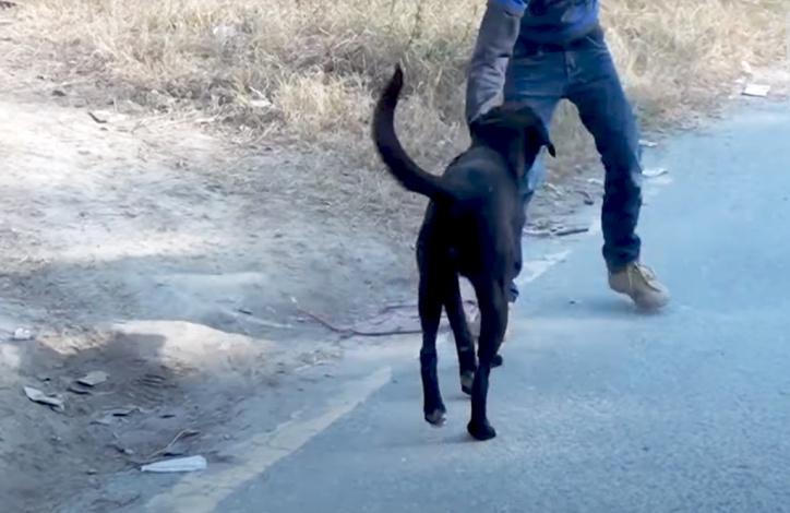 Ловец бродячих собак в Астрахани выбил через суд с администрации города деньги за свою работу