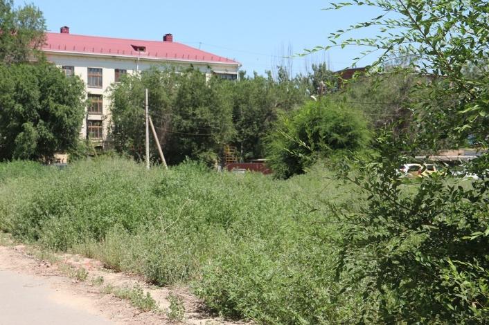 В Астрахани заросли бурьяном драгоценные пустыри под многоэтажки и сквер