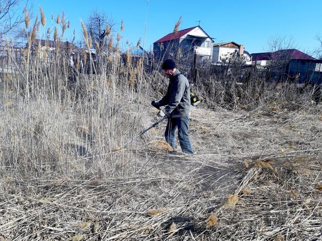 Власти Астрахани приступили к покосу камыша