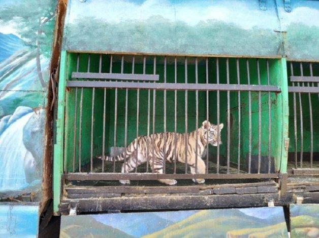 Депутат ГД прокомментировал ситуацию вокруг передвижного зоопарка в Астрахани