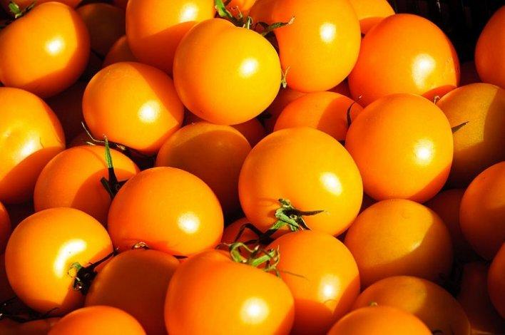 Астраханские аграрии выращивают жёлтые томаты