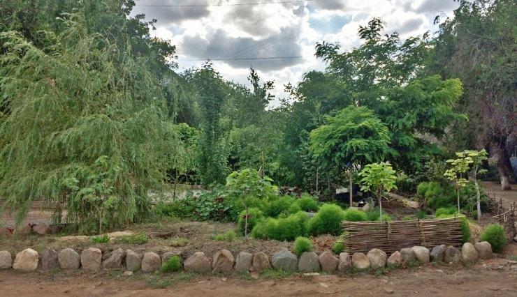 Найден самый красивый двор Астрахани