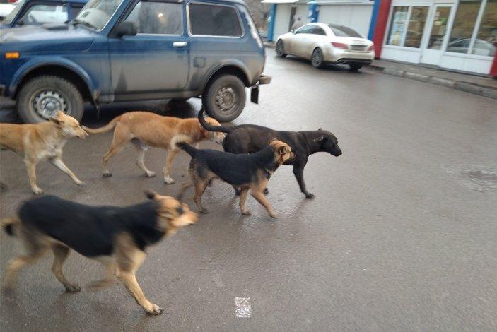 Астраханский депутат возмутился количеством бродячих собак