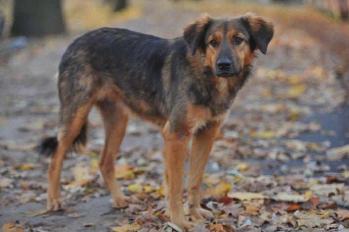 В Год Собаки в Астраханской области построят приют для животных